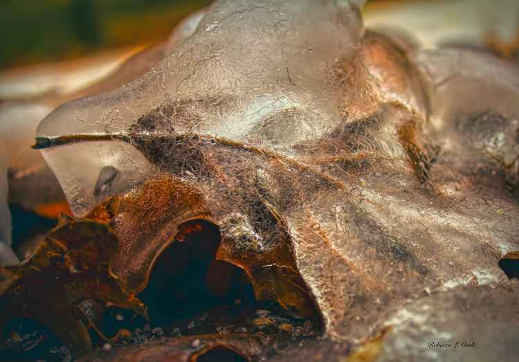 LEAF IN ICE -