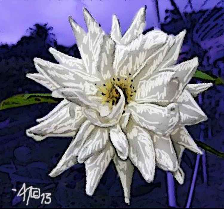 STAR FLOWER -