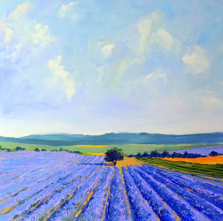 Lavender Field in the Provence - Image 0
