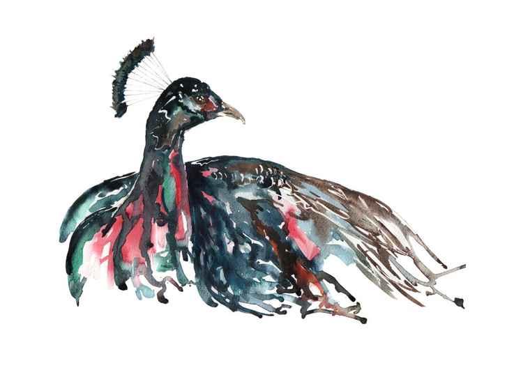 Peacock 2 -