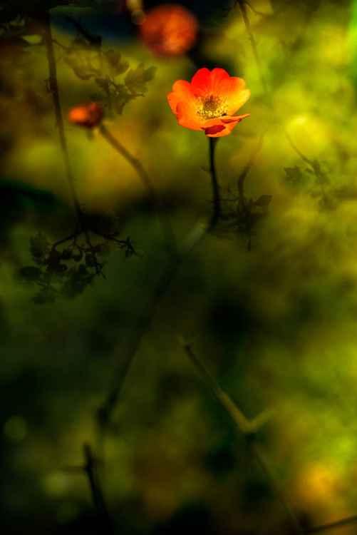 Pond Reflection -
