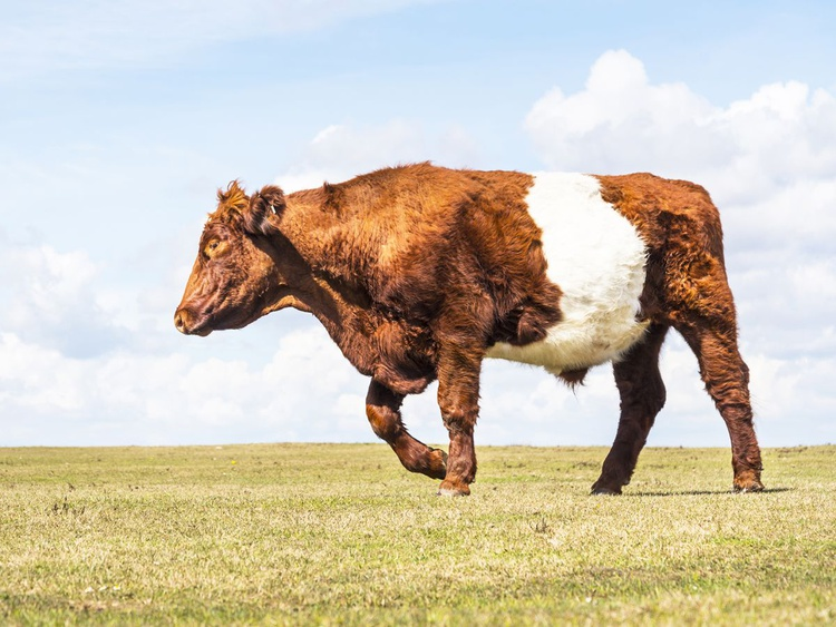 A COW'S LIFE - Image 0