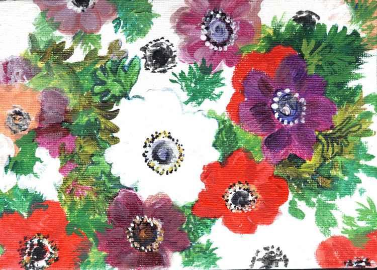flowers : anenome de caan