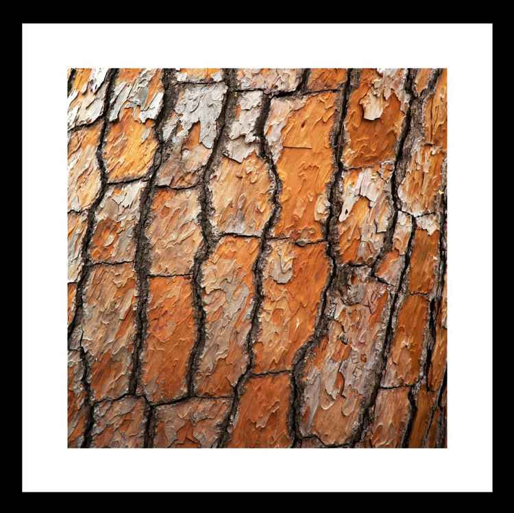 Natural Abstracts - Tree Bark - Mini