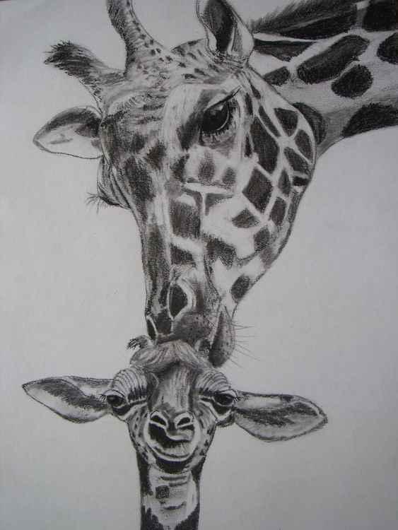 Mum and baby giraffe -