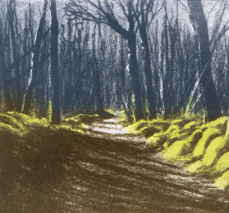 Woodland Shadow 1 - Image 0