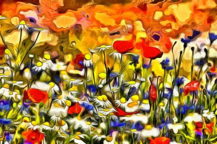 Poppies & Wildflowers -