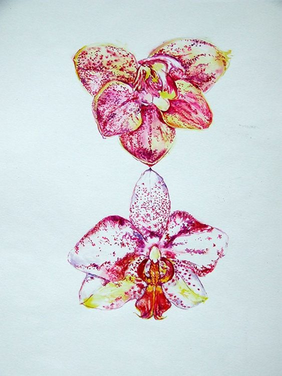 Orchid Flowers / Watercolour - Image 0