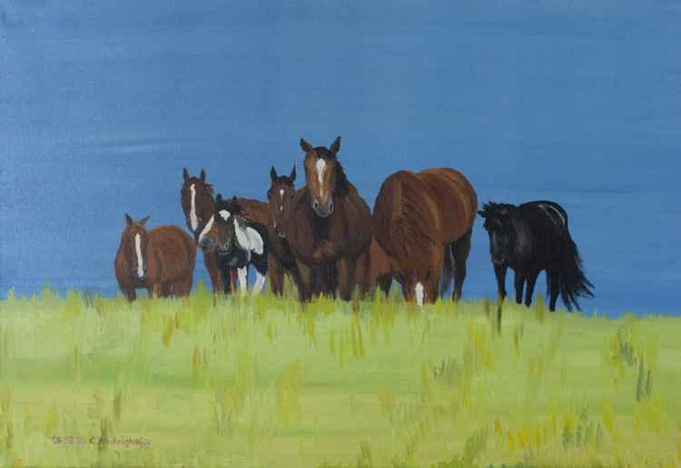 Herd of horses relaxing -