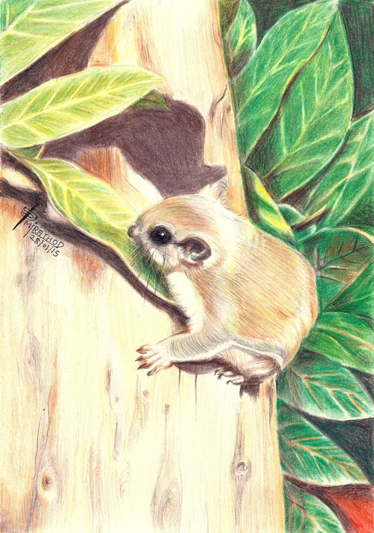 SOUTHERN FLYING SQUIRREL - Image 0