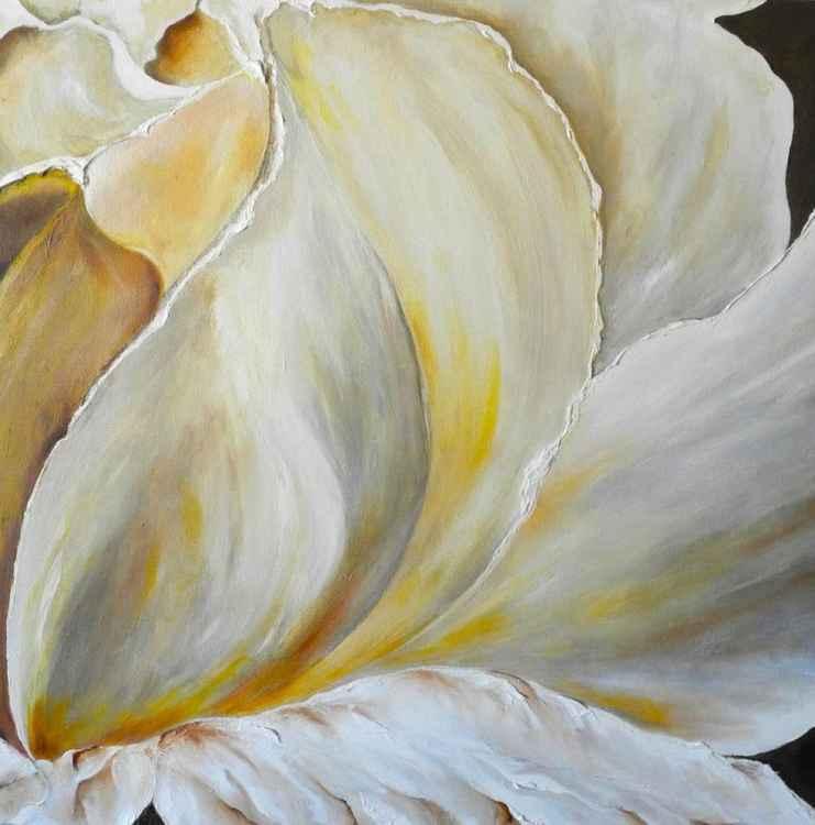 flower magnolia -