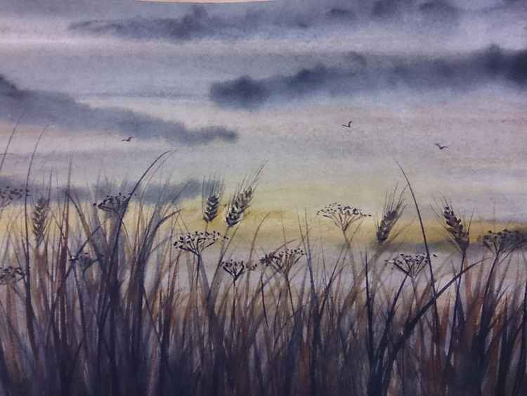 sunset through the grasses -