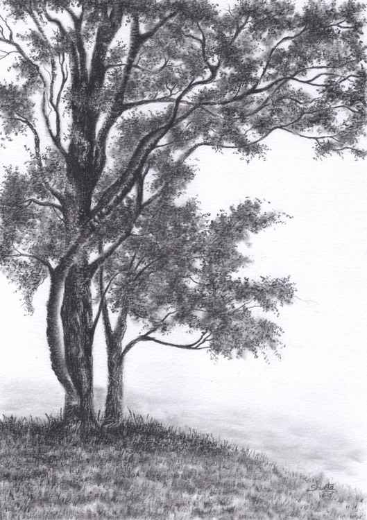Gambel Oak Tree Pencil Drawing