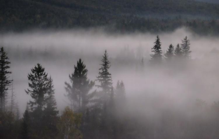 Morning Fog 7 - Image 0