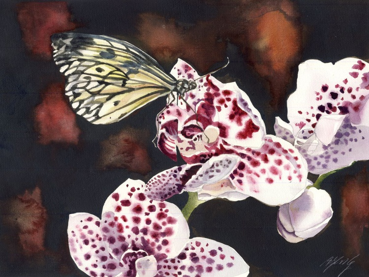 the orchid lover - Image 0