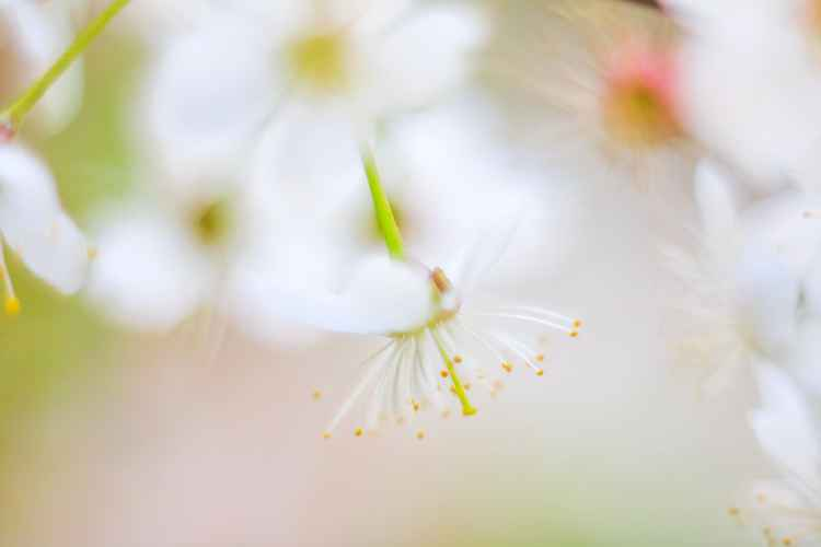 Aquarelle Spring I