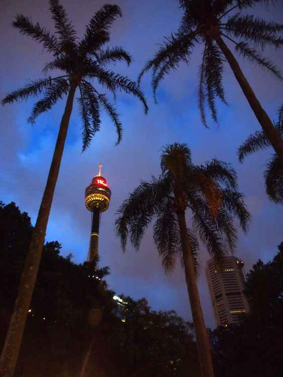Sydney Tower and palm trees at night I -