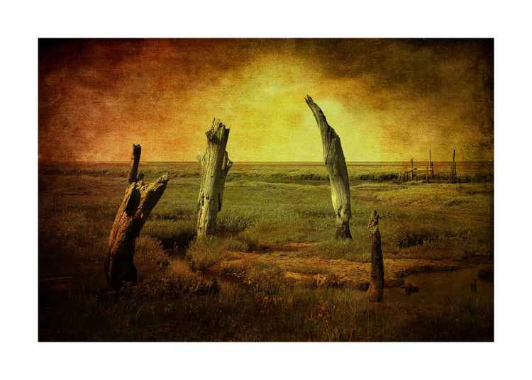 Petrified Trees -