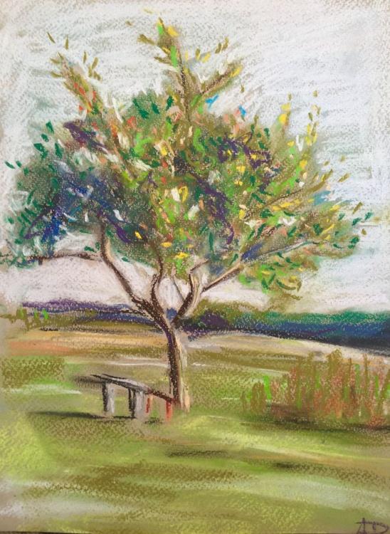 Old Apple Tree - Image 0