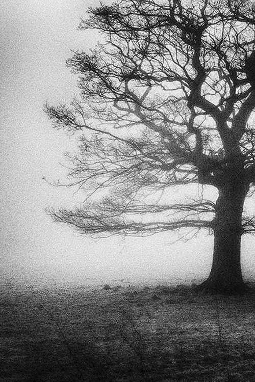 Mist 1 -