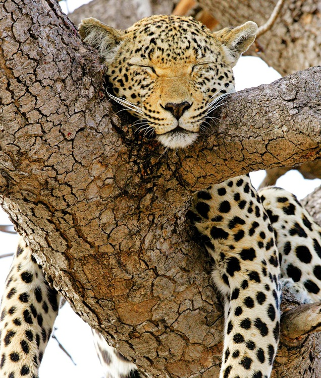 Hanging Around in Africa - Image 0