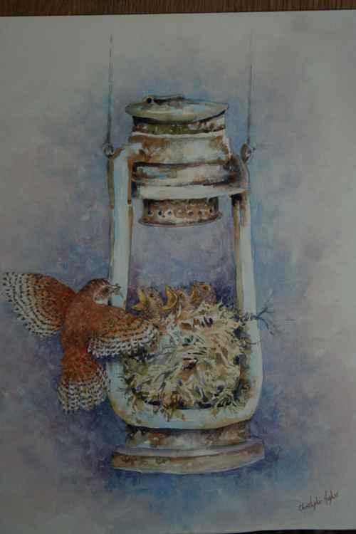 Lamp Wrens