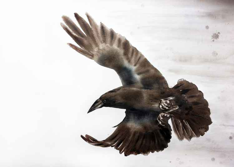 Flying Raven -
