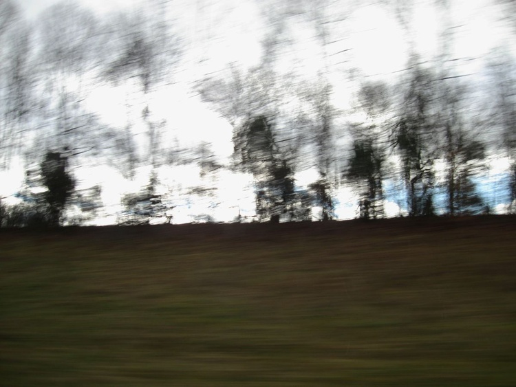 Trees in Motion - Image 0