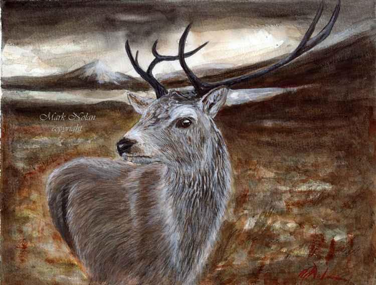 Highland stag -