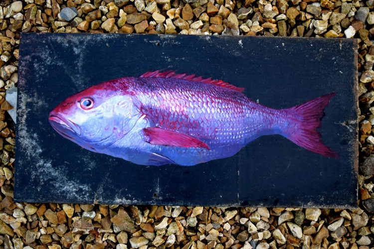 Red Snapper - Image 0