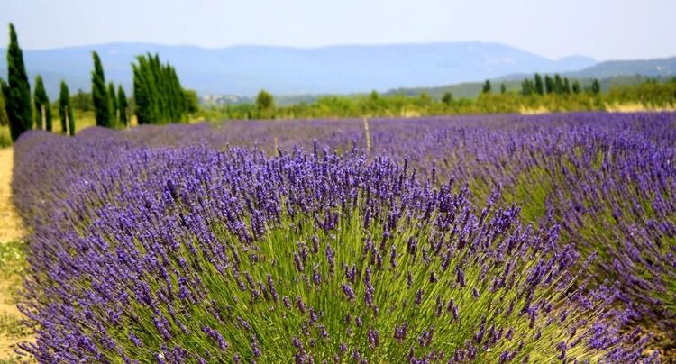 Provence Landscape - Image 0