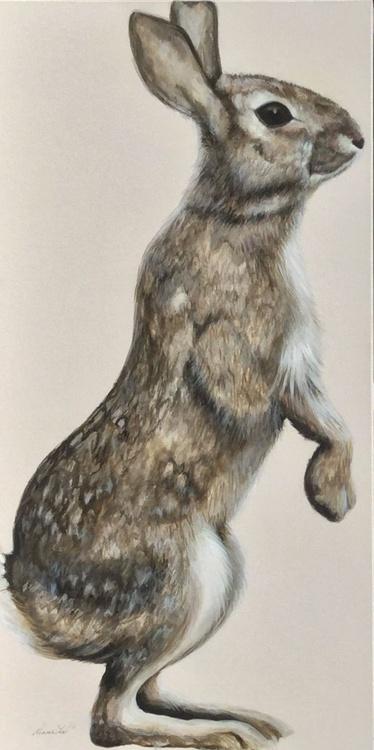 Wild Bunny - Image 0
