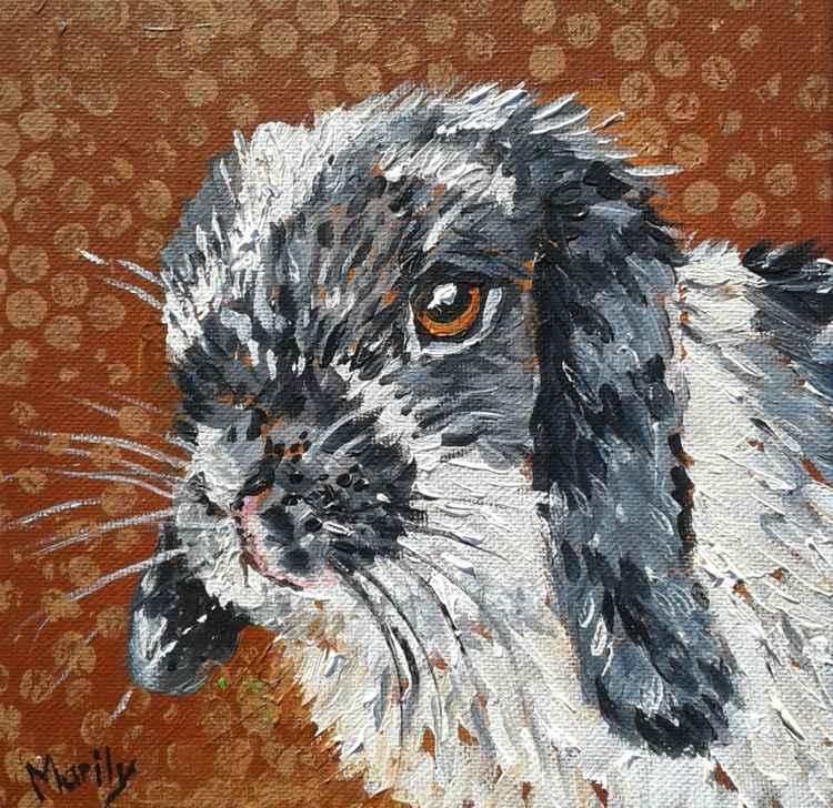Bunny -