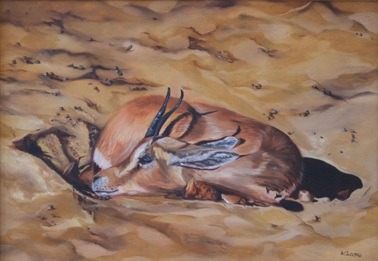 Gazelle endormie - Image 0
