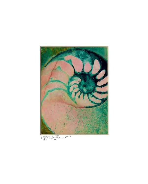 Sea Shell Watercolor Painting, Ocean - Nautilus Shell No. 941