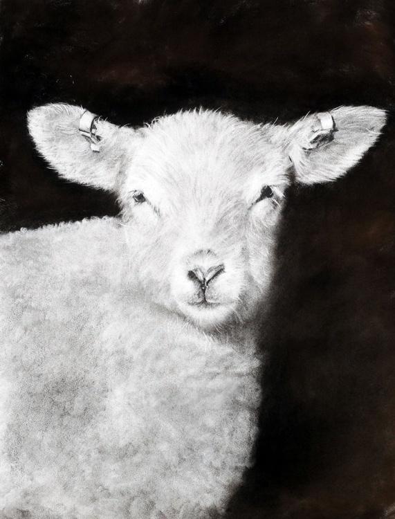 Lleyn Lamb - Image 0