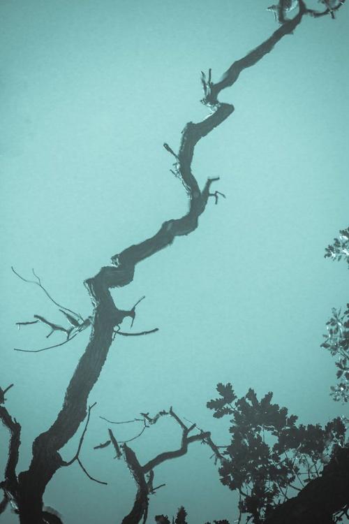 The secret life of trees 2 - Image 0