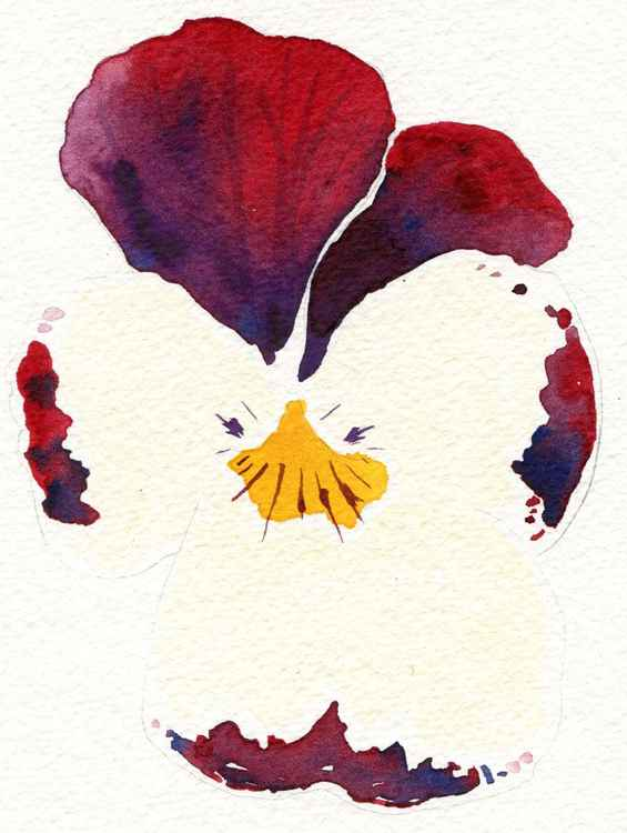 Viola Flower Watercolour -