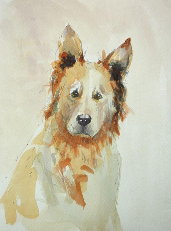 Puzzled Dog - Image 0