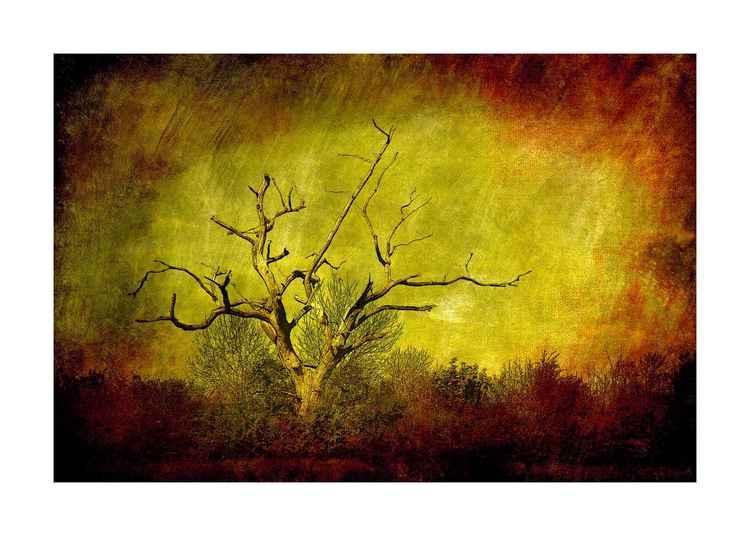 Dead tree landscape -