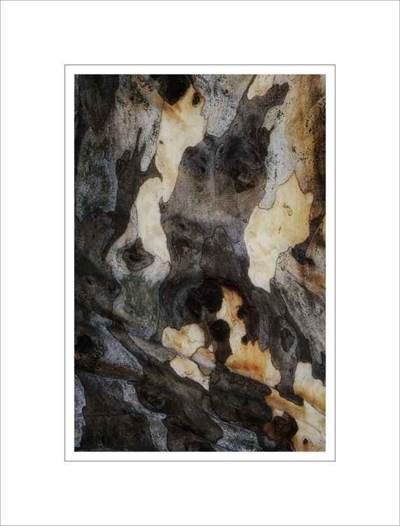 Bark Study 38 -