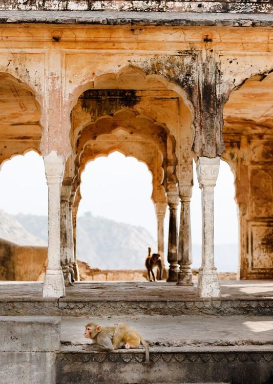 Monkeys in Temple Ruin, Jaipur (30x42cm) - Image 0