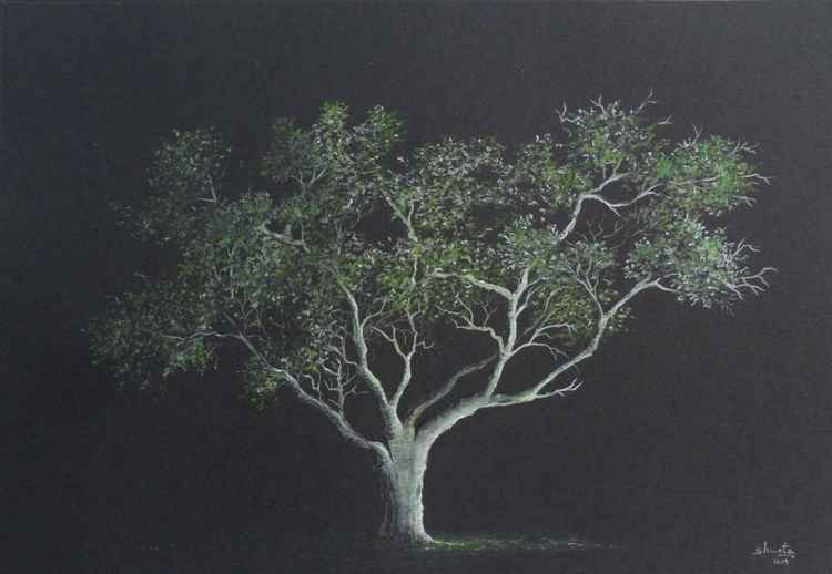 Oak Tree Drawing 2 -