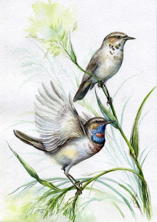 ORIGINAL WATERCOLOR  Bluethroats (LUSCINIA SVECICA) - Image 0