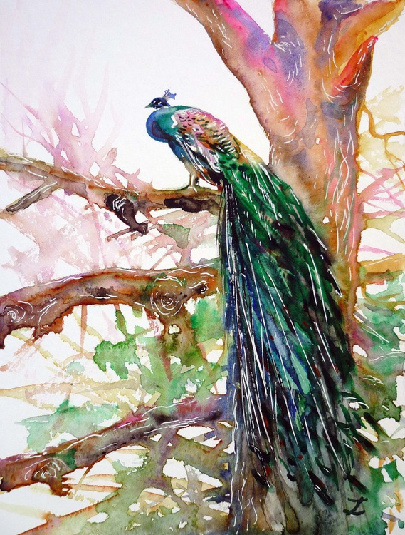 Peacock on a Tree - Image 0