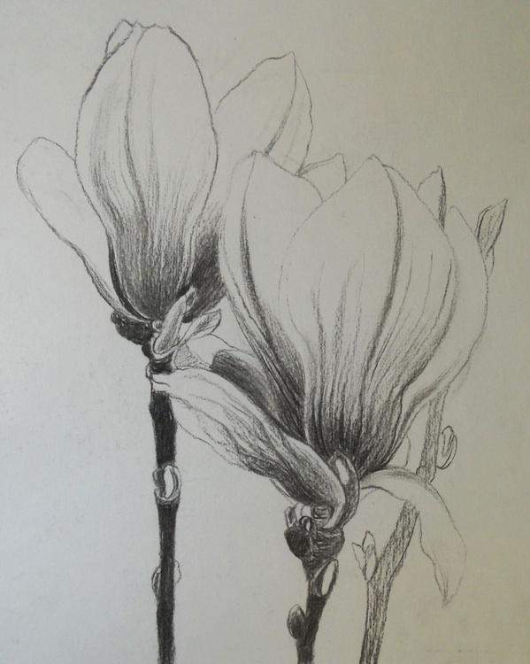 Two Magnolias - Image 0