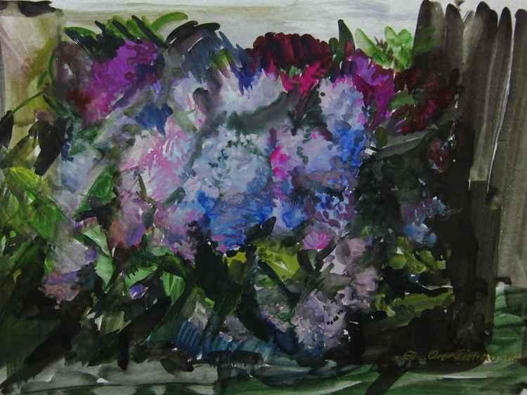 """Wild lilac"""