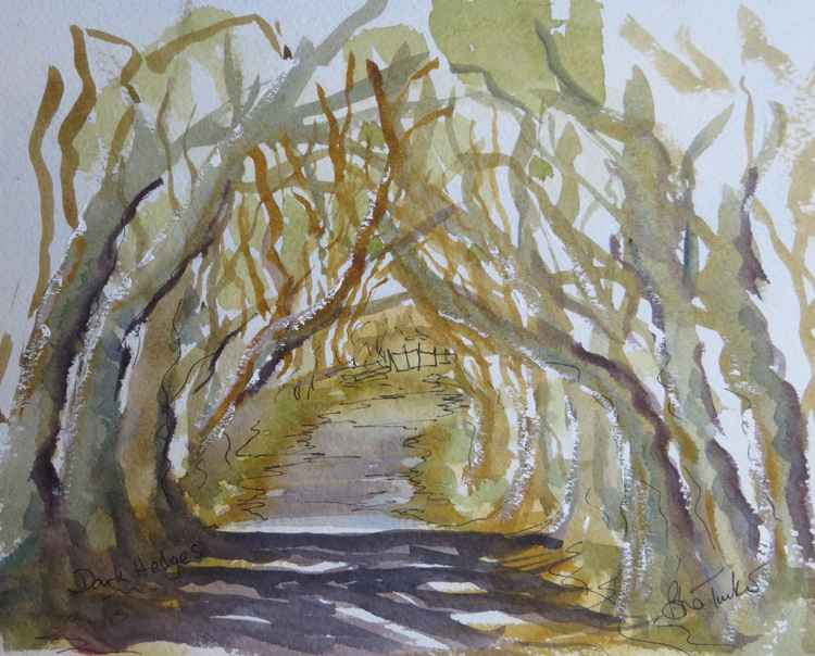 The Dark Hedges,near Armoy in Northern Ireland