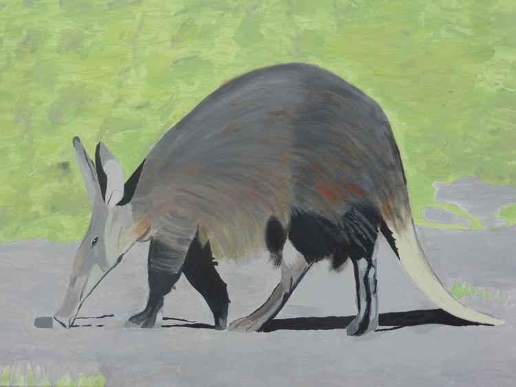 Aardvark -