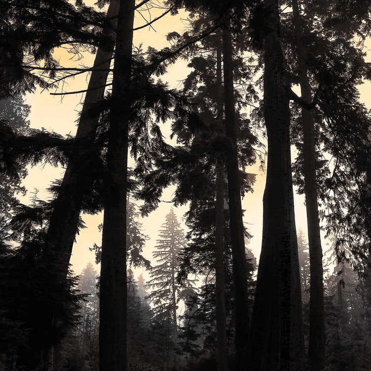 Evening Fog In The Forest - Monoprint - Image 0